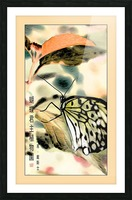 Papillon chinois  Picture Frame print