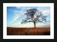 Shubenacadie Tree Picture Frame print