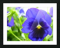 Blue Flowers Photograph Picture Frame print