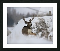 mule Picture Frame print