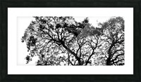 Tree Top Picture Frame print