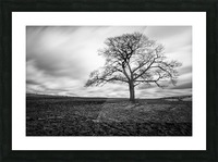 Dark Tree Picture Frame print