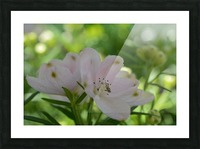 White Flowers Photograph Picture Frame print