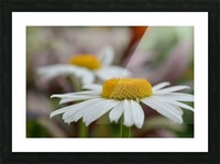 White Flower Photograph Picture Frame print