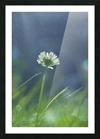 DSC_0245 Picture Frame print