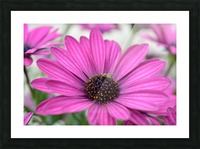 Purple Flower Photograph Picture Frame print