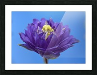 Blue Flower Photograph Picture Frame print