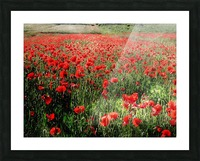 Rolling Fields with Poppies Picture Frame print