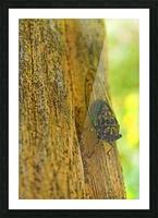 Cicada Picture Frame print