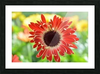 Red Flower Photograph Picture Frame print