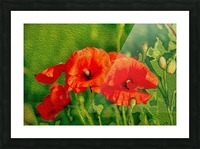Red Poppies Picture Frame print