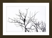Pileated Woodpecker - Large Picture Frame print