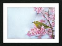 Bird In Sakura Cherry Blossom Tree Picture Frame print