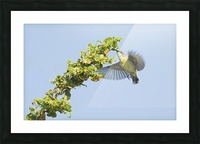 Flight moment Picture Frame print