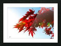 Chinese Maple Impression et Cadre photo