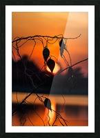 Vine Milkweed at Sunset Picture Frame print