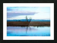 20190228 DSC_0079 Picture Frame print