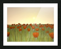 RED POPPIES at Sunset Picture Frame print