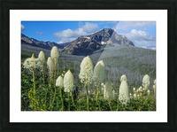 Bear Grass Fields Picture Frame print