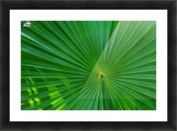 Palm tree detail Picture Frame print