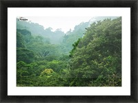 Rainforest Canopy Picture Frame print