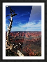 Grand Canyon framed by tree Picture Frame print