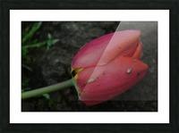 Fallen Beauty 2 Picture Frame print