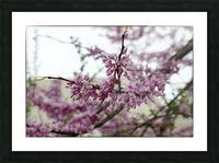 Blooming Picture Frame print