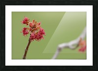 Blooming 2 Picture Frame print