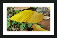 Autumn Leaves Picture Frame print