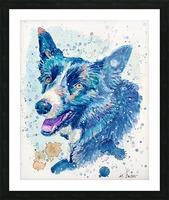 Border Collie Dog - Portrait of Habbey Picture Frame print