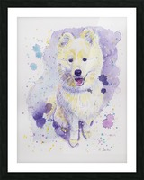 Samoyed Dog - Portrait of Juno Picture Frame print