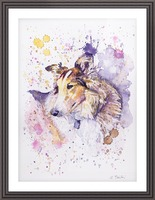 Sheltie Dog - Portrait of Aria Picture Frame print