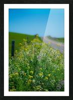 20190330 DSC_0592 Picture Frame print