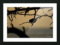 Branch Picture Frame print