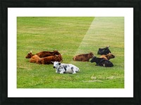 Rumination Picture Frame print
