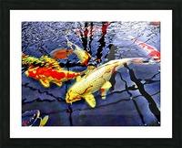 Koi Carp Huddle Picture Frame print