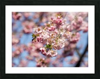 Cherry blossom Red Picture Frame print