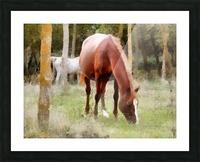 Pregnant Tan Mare Grazing Picture Frame print