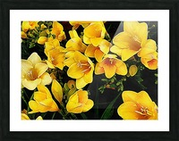 Yellow Freesias Picture Frame print