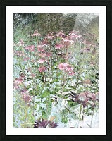 Echinacea Picture Frame print