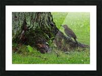 Pic flamboyant  Picture Frame print