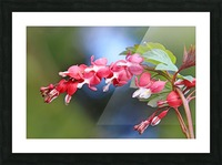 Natures Red Hearts Picture Frame print