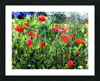 Green Pasture With Red Poppies Picture Frame print