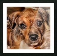 Dog Art Picture Frame print