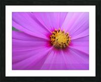 Purple Cosmo Picture Frame print