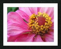 Unknown in Pink Picture Frame print