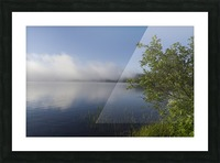 Early Morning Fog Bank Picture Frame print
