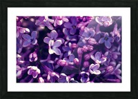 Flower world Picture Frame print