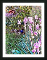 My Secret Iris Garden Picture Frame print